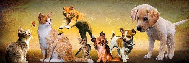 psy a kočky.jpg
