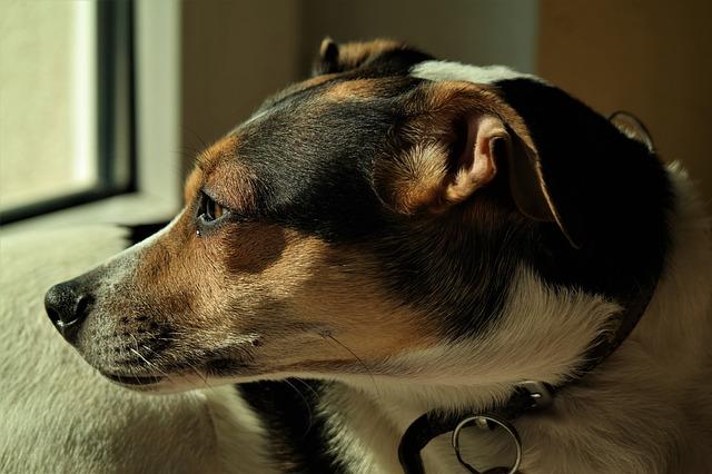 pes u okna.jpg
