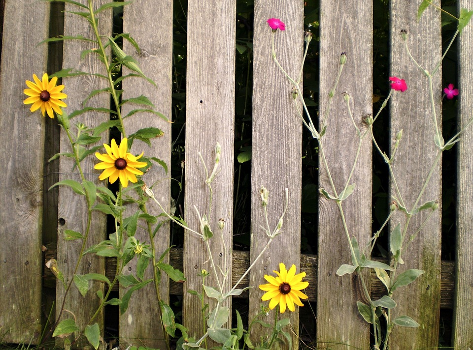 plot s květinami